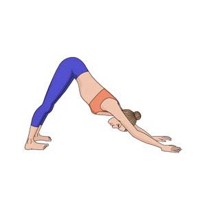 Surya Namaskara Step 8 : Parvatasana