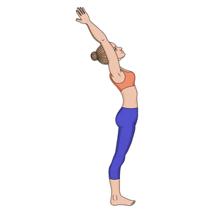 Surya Namaskara Step 11 : Hasta-Uttanasana