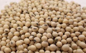 7 Wonderful Health Benefits Of Soya Bean
