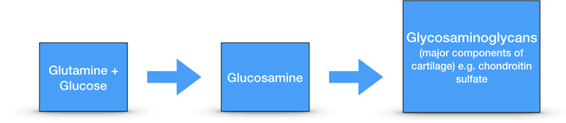 How Our Body Produces Glutamine